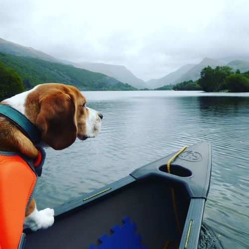 EyeEm Selects Beagle Beaglelife Beaglepuppy Travel Destinations Cloud - Sky Tranquility Beauty In Nature No People Sky Day One Animal Nature Animal Themes Pets Outdoors Dog Puppy Beaglelovers Beagleoftheday North Wales Llanberis