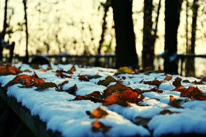 Autunn Snow Nature