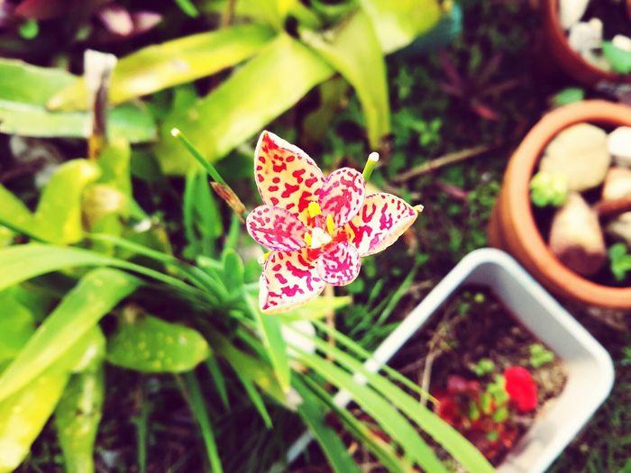 Flower Micro