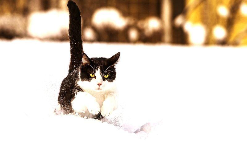Gato Escaping First Eyeem Photo