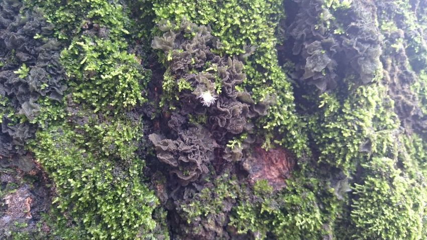Backgrounds Beauty In Nature Close-up Day Green Color Growing Growth Liquen Moss Natural Pattern Nature No People Outdoors Outerworld Tranquility Tree Tree Trunk Urban Life Urban Plants