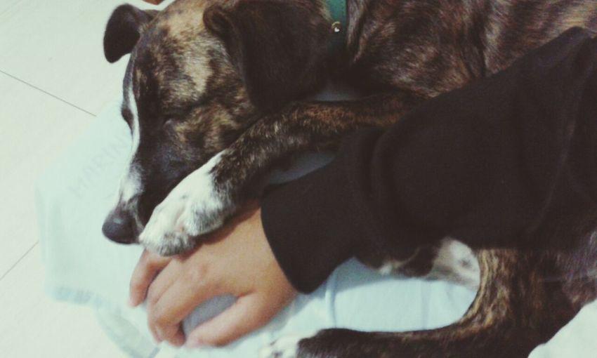Dog Love AnimaLs <3