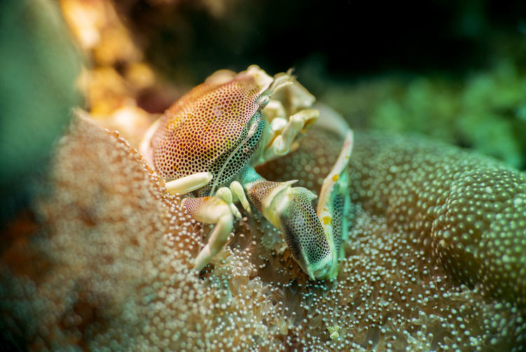 Close-Up Of Crab On Coral In Sea