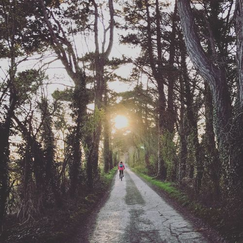 Rear view of man riding bicycle on footpath amidst trees during sunset