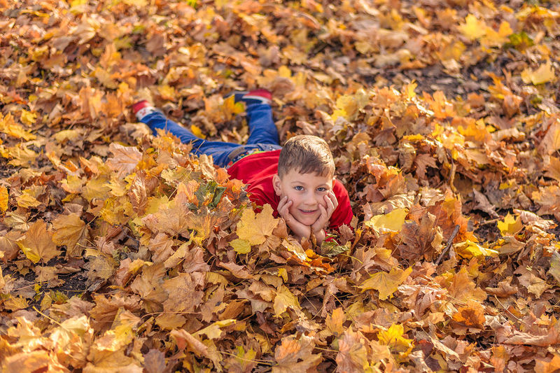 Portrait of boy on maple leaves during autumn