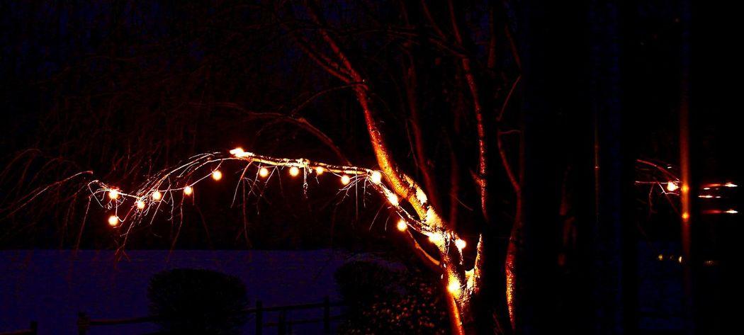 Johnleephotography Winter 2016 Outdoors Snow Tree Hanginglights Shotoncanon Insomnia Sleep Deprived No Sleep CanonT5i Manfrotto