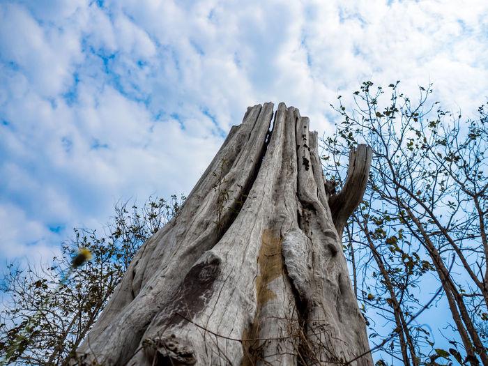 Dead Tree Asian
