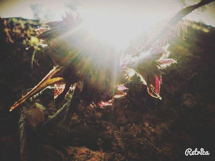 Violetflowers Creepers Brokenwalls Kodikanal Magicalarts Boom Boomsaraswathy Saraswathymagic🌈⏹
