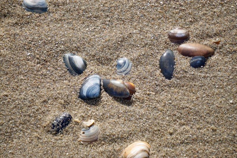 Muscheln EyeEm Selects Sand Land Beach High Angle View Sunlight Nature Day Animal Wildlife Animal No People Shell Seashell Outdoors Close-up Animal Themes Animals In The Wild Animal Shell Pattern Still Life Beauty In Nature