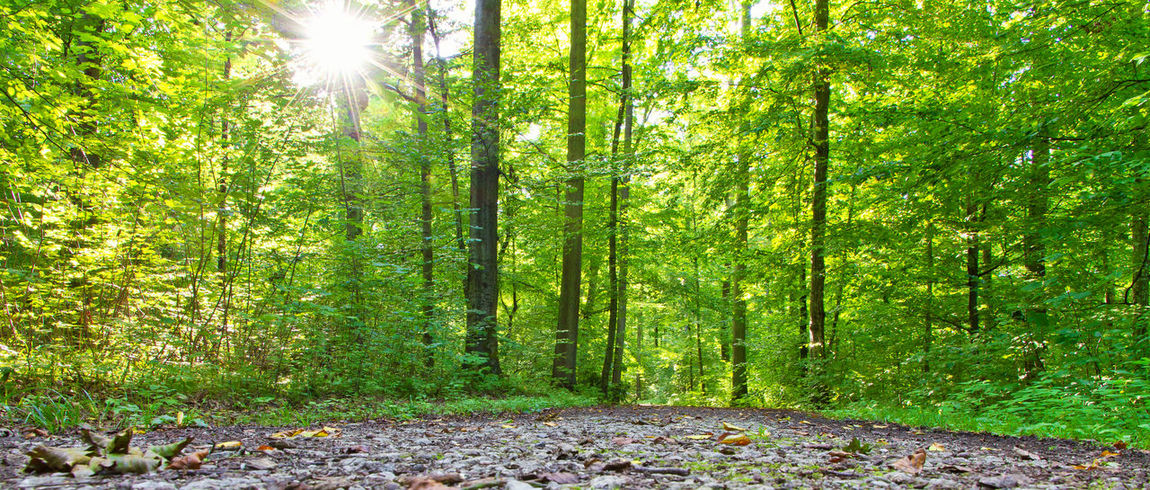 Natural green forest in the sun Baden-Württemberg  Green Happiness Meditation Nature Panorama Panoramic Day Ecology Environment Forest Germany Health Landscape Nature Psychology Scenics Schwäbische Alb Sun Sunbeam Sunlight Sustainability Tranquility Way WoodLand