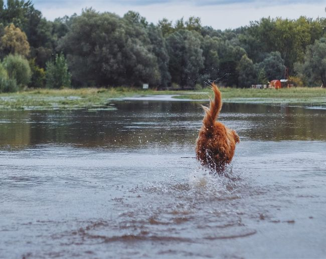 Water Lake One Animal Animal Themes Waterfront Animals In The Wild Nature Day Golden Retriever Fujifilm_xseries Swimming Dog Outdoors Tree Beauty In Nature Mammal The Week On EyeEm