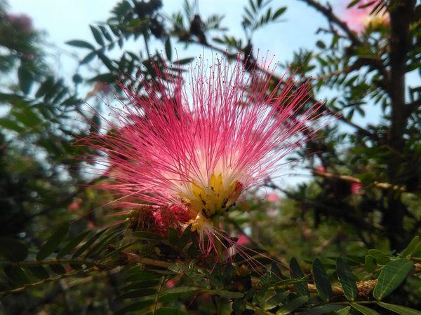 Flower Tree Sky