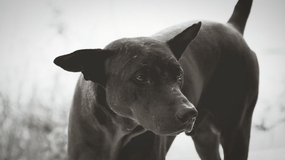 A friend Animal Outdoors Day Close-up Dog Black & White