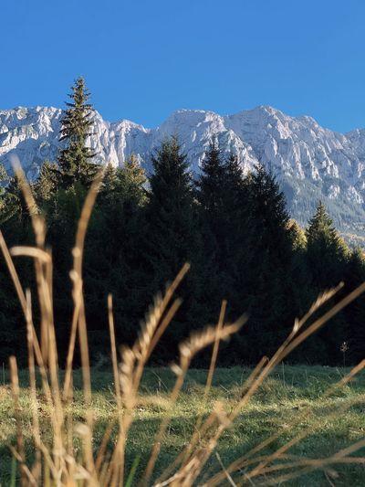 Plants growing on field against mountain range