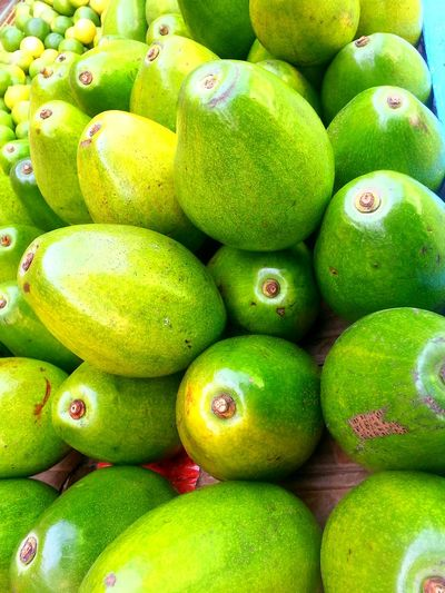 Cosecha de aguacates. Fruts Nature Taking Photos Fruta♥ From My Point Of View Green Downtown