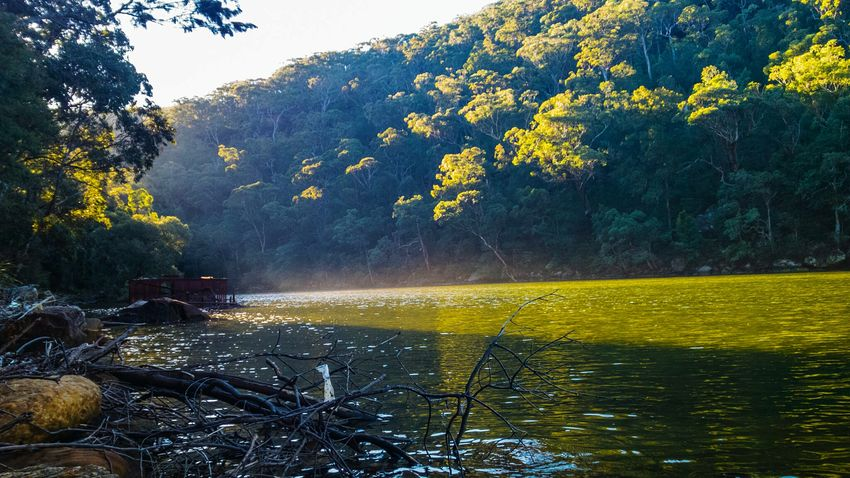 Walking alongside Cowan Creek near Apple Tree Bay, Berowra, Sydney. Lumia930