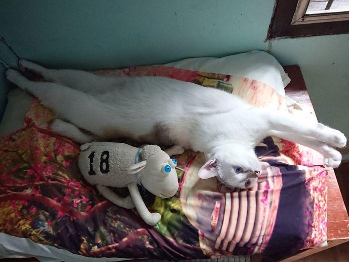 Pets Lying Down