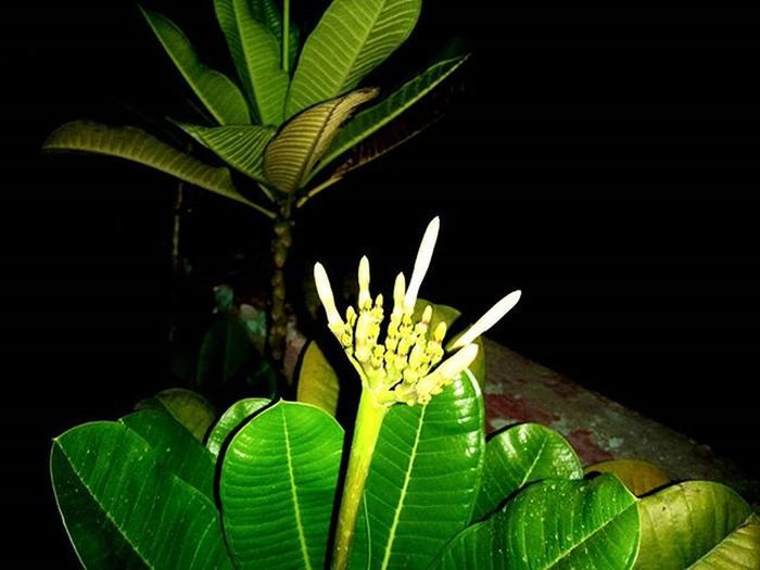 Plant Green Greenery Night Nighphotography Boi Photographers_of_india Indiaclicks