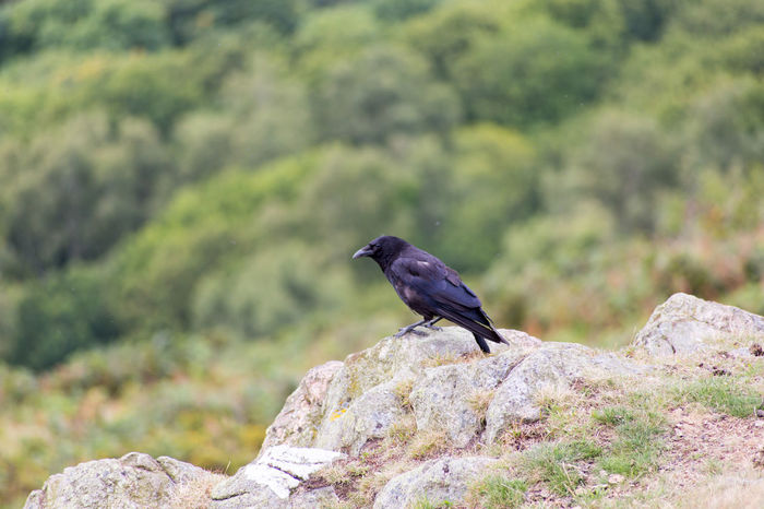 One Animal Rock - Object No People Nature Day Outdoors Perching Birds Bird Photography Bird Perching Bird Perching Birds Perched Birds Rock