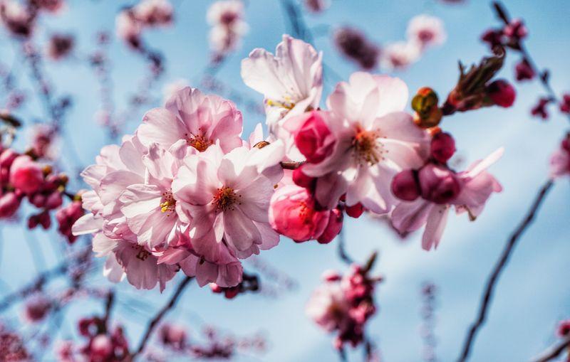 2019 Niklas Storm April Flower Head Tree Flower Branch Springtime Pastel Colored Pink Color Petal Blossom Stamen My Best Photo