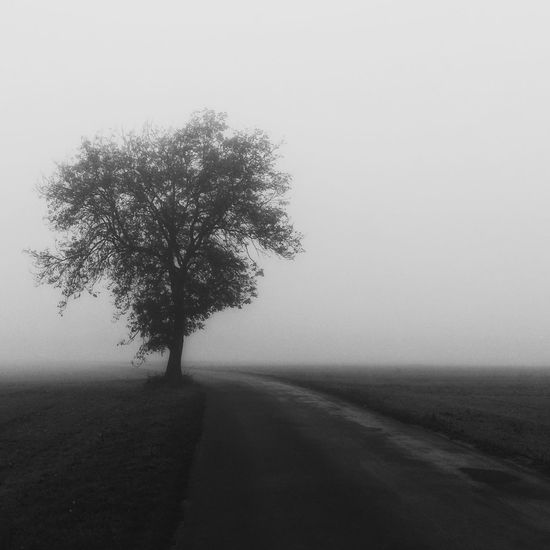 Trees Tree Fog Foggy Foggy Morning Foggy Day Foggy Weather Road On The Road Countryside Village Lonely Tree Lonely Loneliness IPS2015Fall IPS2016Landscape
