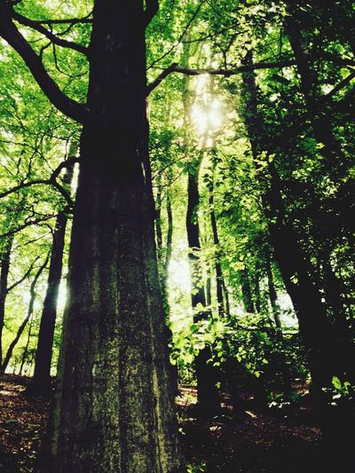 Forest Sunlight Green EyeEm Nature Lover
