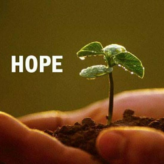 Hope Trees Plants 🌱