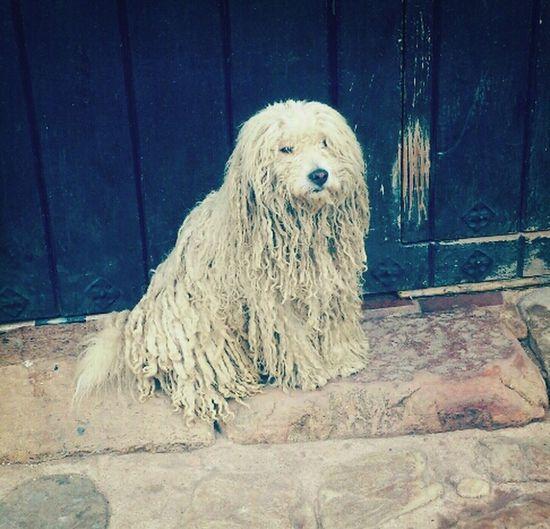 perro rasta Petstagram