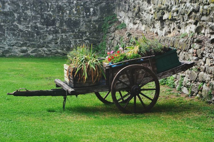 Potted plants on push cart in back yard