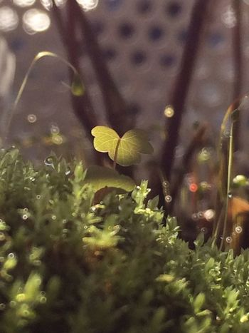 Good Morning!(o'∀'o)b Nature IPhoneography Plants 苔 Moss