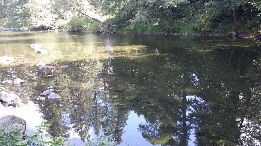 Lewis river serene reflections