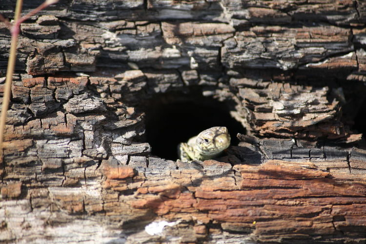 Close-up of lizard in hollow log