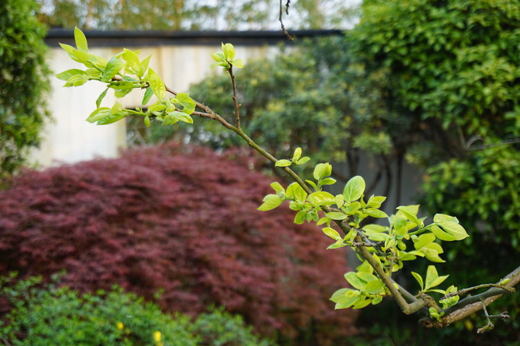 Plant Leaf Nature Green Color Outdoors Tree Close-up Beauty In Nature Freshness Spring No Filter