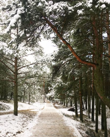 Tree Snow Winter Cold Temperature Nature The Way Forward Beauty In Nature No People Snowing Landscape Forest Path Forest Russia Curonian Spit Kaliningrad куршская коса куршскаякоса калининградскаяобласть калининград высота Эфа