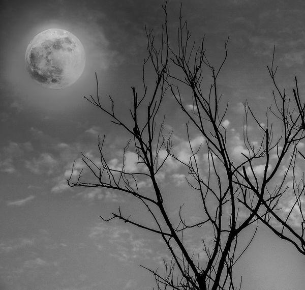 Moon Nightphotography Night Branches Trees Tree Sky Nikon India Kerala