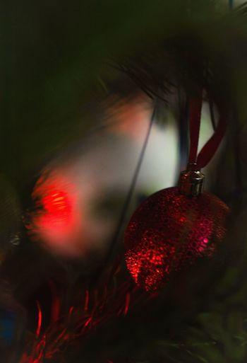 Christmastime Marry Christmas Cristmasdecor Cristmas Cristmastree Cristmas Time♥ New Year Cristmas Tradition Happy New Year Cristmastime Cristmas Tree CRISTMAS💙 New Year Around The World New Years