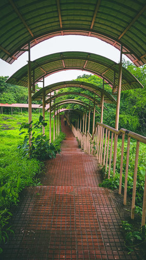 Footpath in greenhouse