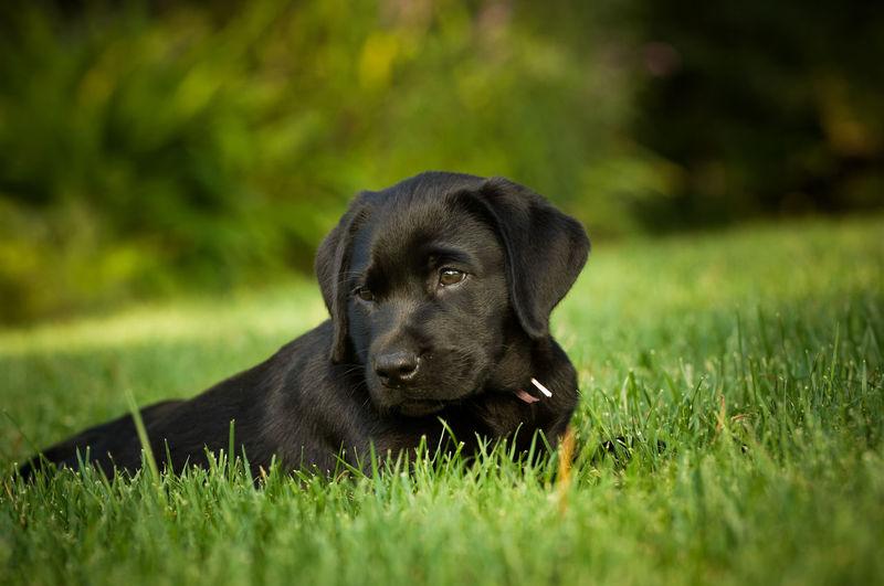 Puppy Sitting On Grassy Field
