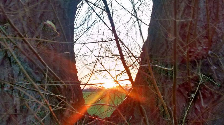 Taking Photos Beauty In Nature EyeEm Best Shots - Landscape EyeEm Gallery Enjoying Life Nature On Your Doorstep Naturephotography Eyemphotography Enjoying Life EyeEm Best Edits Nature Photography EyeEm Best Shots Eyemgallery EyeEmBestPics EyeEm Nature Lover EyeEm Best Shots - Nature Sunny Day My Live, My Wold First Eyeem Photo Sunshine Sunset #sun #clouds #skylovers #sky #nature #beautifulinnature #naturalbeauty #photography #landscape Flowers, Nature And Beauty Nature_collection Taking Photos Hello World