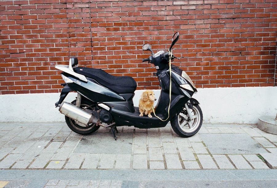 Brick Wall Street Transportation Outdoors No People Dog Scooter