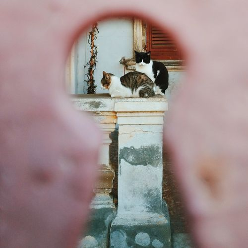 Cat Cats Cat Lovers Cats Of EyeEm Window The Secret Spaces Tranquility Outdoors Cagliari Sardegna Natureza Beauty Of Nature City Life Minimalism Animal Themes Looking At Camera Pets Pet Portraits Be. Ready.