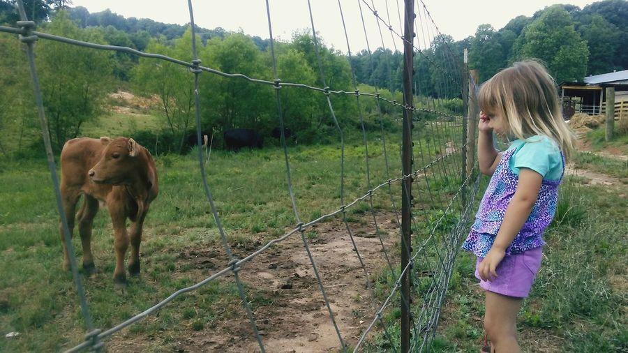 My little girl playing pic a boo with The baby cow First Eyeem Photo