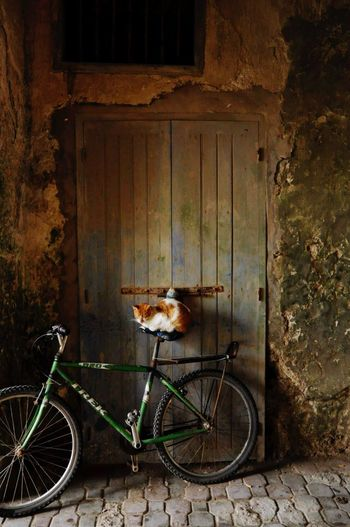 Bicycle One Animal Outdoors Day Cat♡ Lifestyles Maroko  Street Photography Maroccostyle Marocco 2016