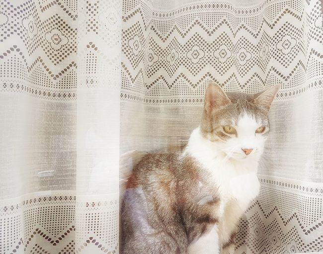 Backgrounds Pattern EyeEm Best Shots France🇫🇷 EyeEmNewHere EyeEm Best Edits Paris ❤ Capture The Moment The Week On EyeEm Cat Window Cat On The Window EyeEm Cats EyeEm Cats Lover