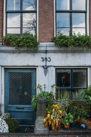 Plants growing against window