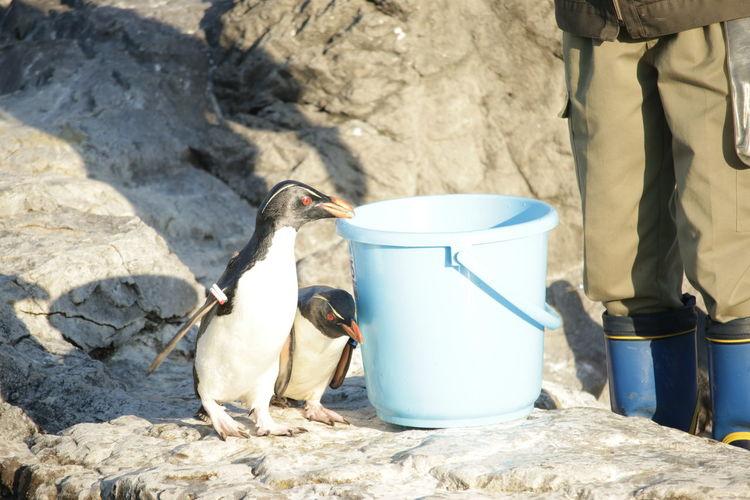 Animal Themes Aqarium Day Drink Food Time Iwatobi Penguin Japan Kasai Rinkai Park Mammal Milk No People One Animal Outdoors Penguin Rock Jumping