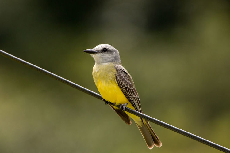 Close-up of bird perching on yellow leaf