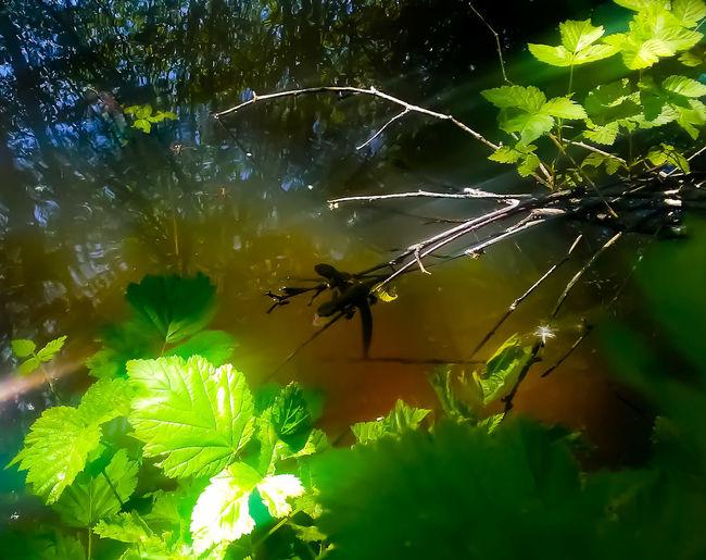 wildlife refuge salamanders Water Nature Animal Wildlife Salamanders Leaf Green Color Plant Calm