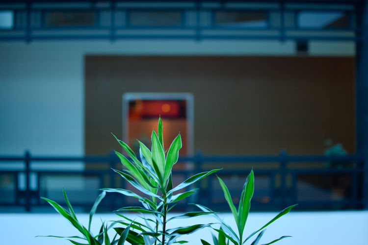 Interior of a Vietnamese building with green plant centre frame Green Vietnam Architecture Blue Building Interior Built Structure Close-up Colour Day Flower Focus On Foreground Indoors  Interior Nature No People Plant Plant In Office Simple Still Life