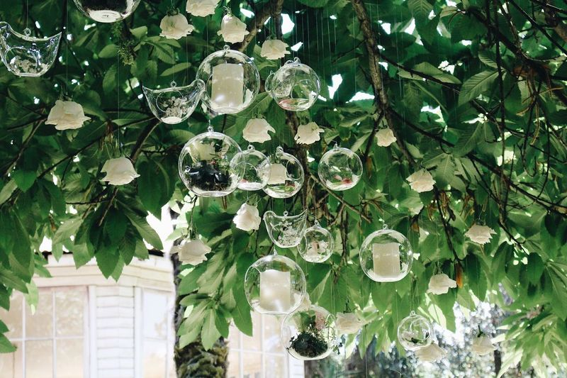 Decoration Wedding Plant Growth Tree Leaf Plant Part No People Day Green Color Nature Outdoors Beauty In Nature